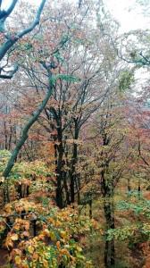 2019-10 jesien na Kaszubach (2)