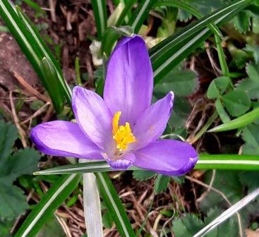 górskie kwiaty na Chochołowskiej (3)
